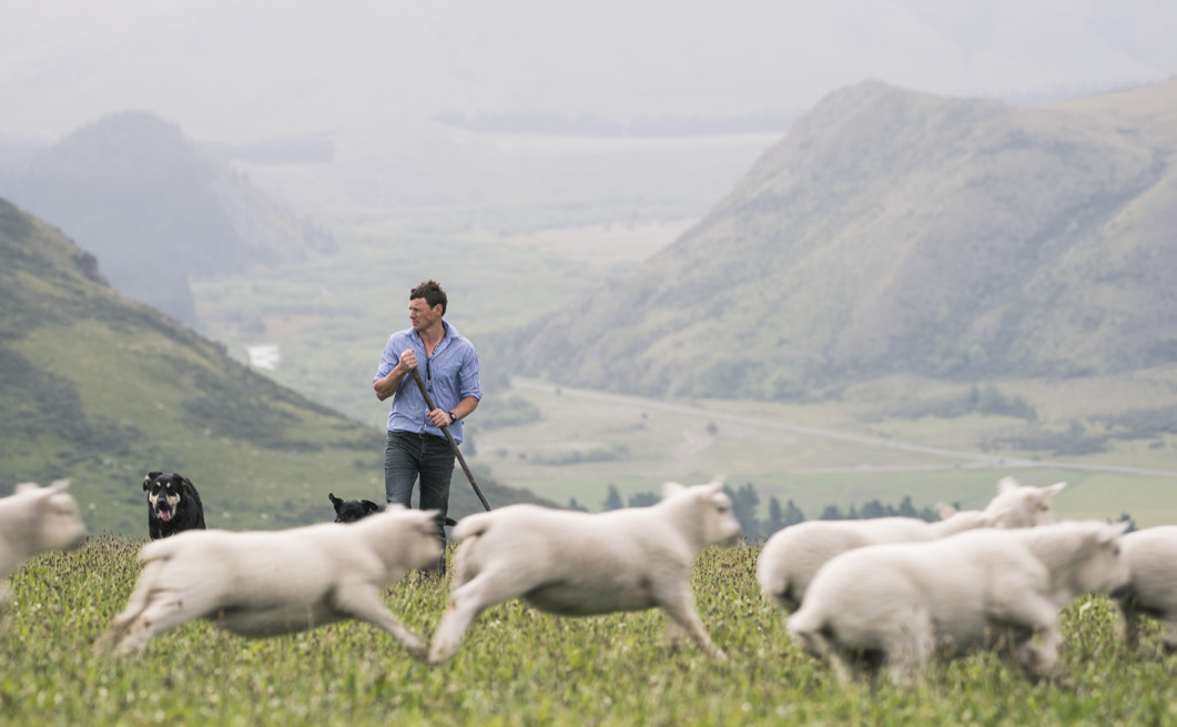 Bert Oliver with high altitude Wairere bred Kumanu lambs.